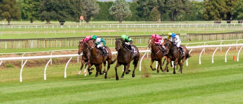 Let's Have a Look at Tauranga Racecourse