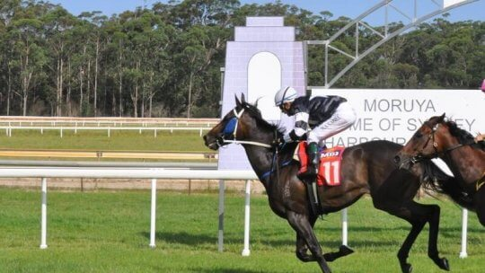 The Narooma Cup Betting in Detail for Punters Online
